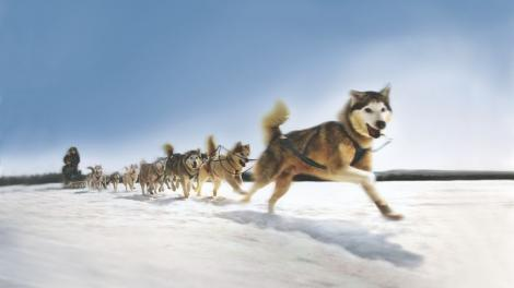 Dog Sledding in Maine