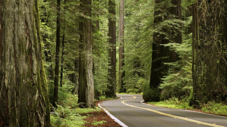 List Of Synonyms And Antonyms Of The Word Redwood Forest