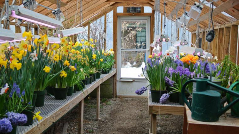 4 boston gardens to visit in spring for Wellesley college botanic gardens