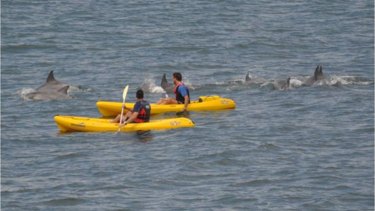 Curious Dolphins Keeping Kayakers Company