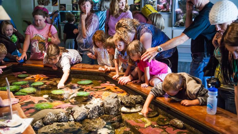 Children and parents reach in and touch the marine life in the touch pools