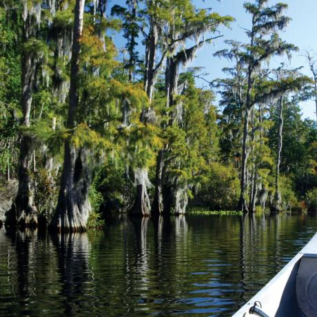 Exploring the swamplands by canoe