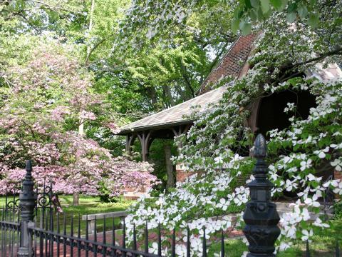 Dogwood Trail Celebration's pretty blooms