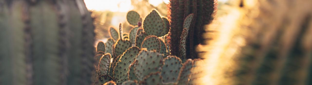 Saguaro Natural History Association