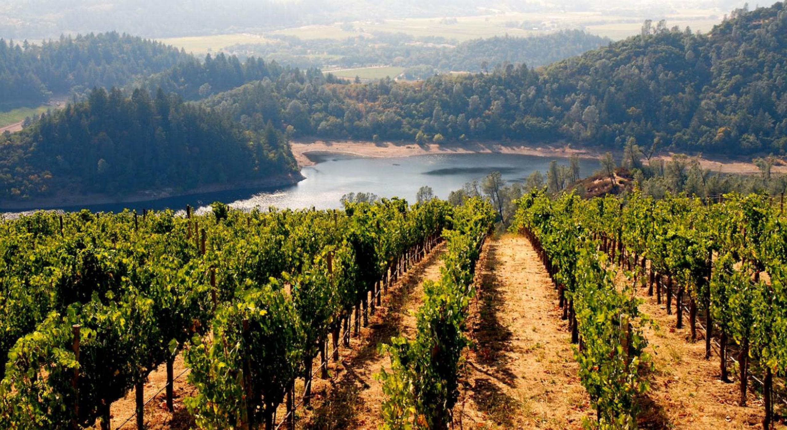 From the Bay to the Vine: San Francisco to California Wine Country
