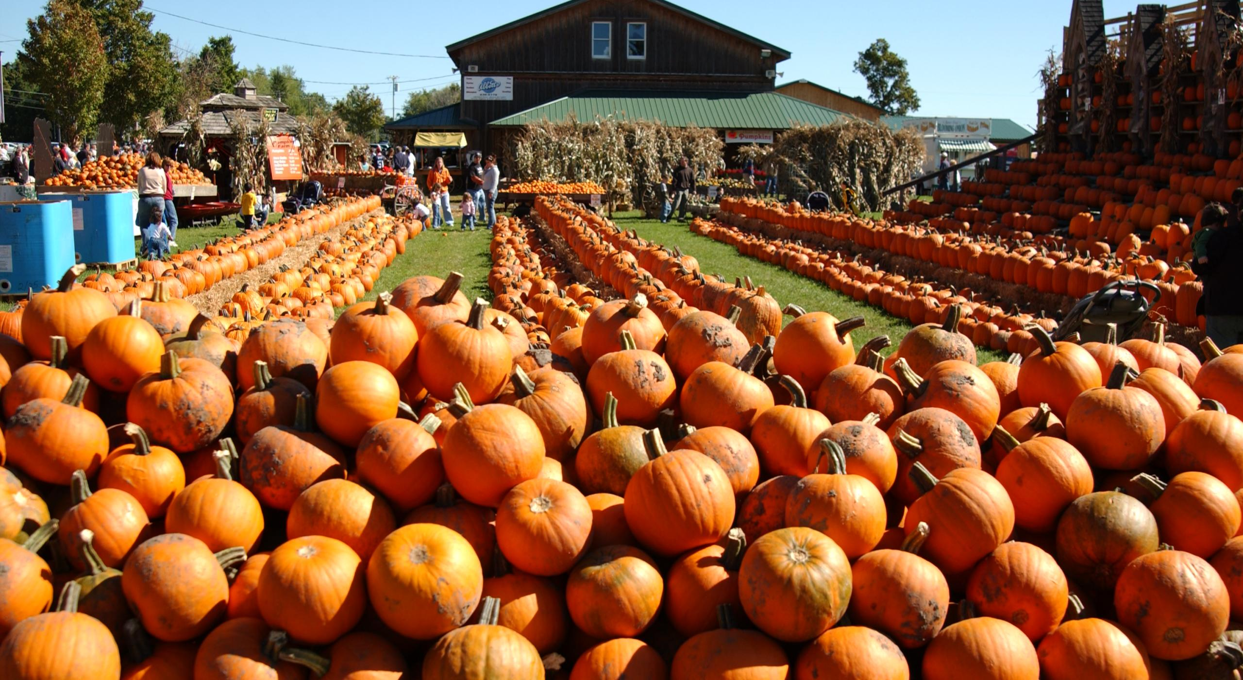 Fall Harvest Festivals For The Family Visit The Usa