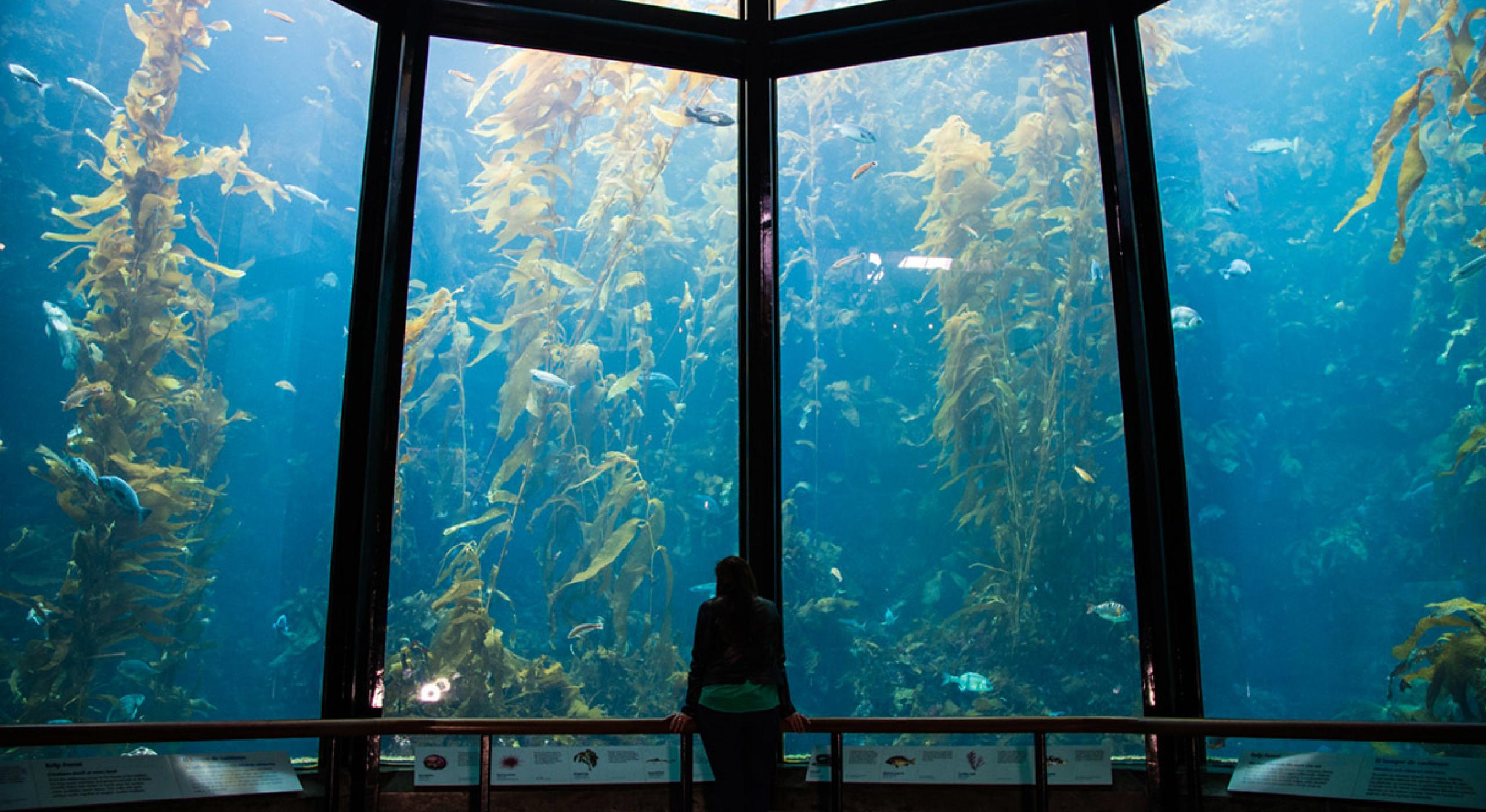 Is Monterey Bay Aquarium Open On Memorial Day - Aquarium Views