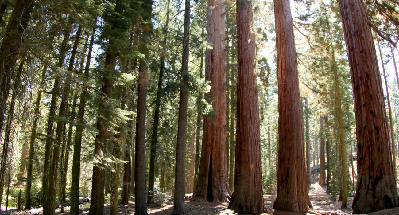 Redwood national and state parks visit the usa arches national park yellowstone national park redwood national park sciox Choice Image