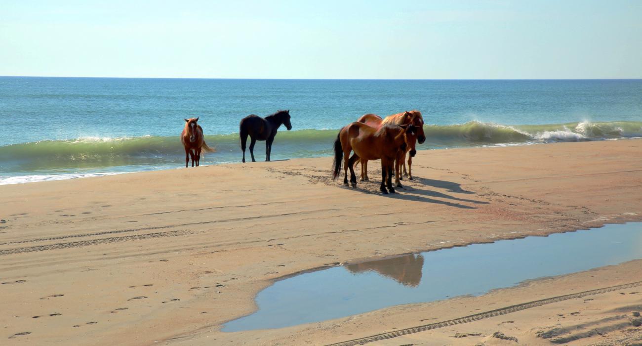 Outer Banks Currituck North Carolina USA Beach Vacation