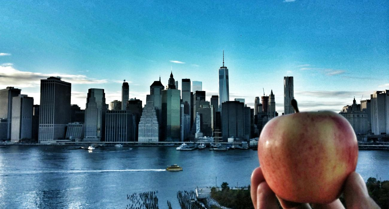 Exploration new york
