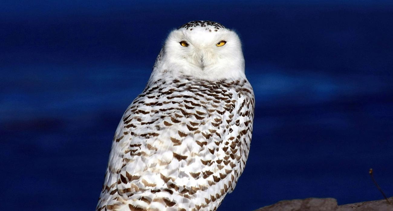 8 USA Animals You'll Only See at Night