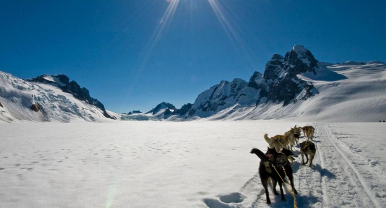 your very own dog sledding adventure in alaska visit the usa