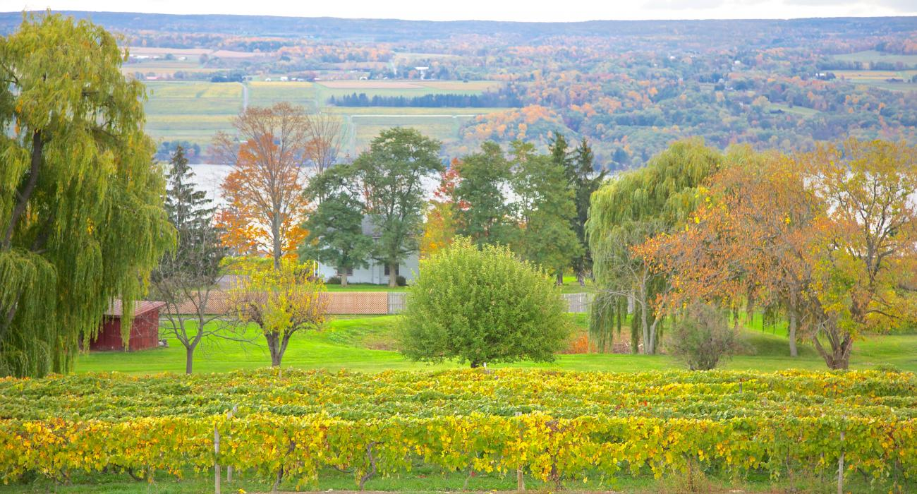 Glenora Wine Cellars Finger Lakes & Take a New York Road Trip to Enjoy the Wine Water and Wonder