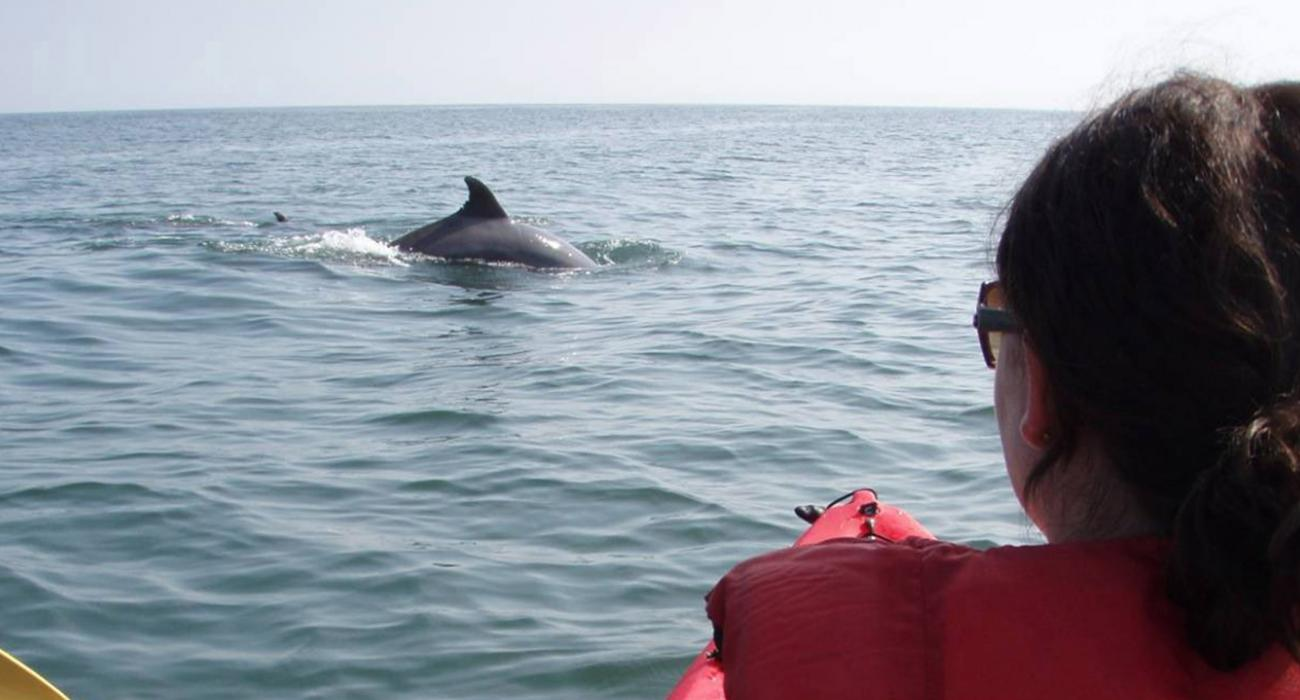 Kayaking With Dolphins Along The Virginia Beach Coastline