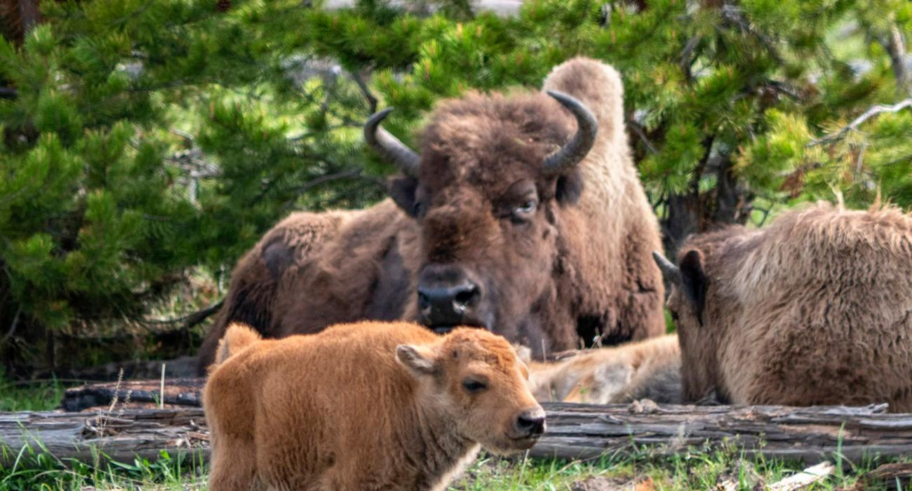 West Yellowstone, Montana Tourism – Attractions, Activities