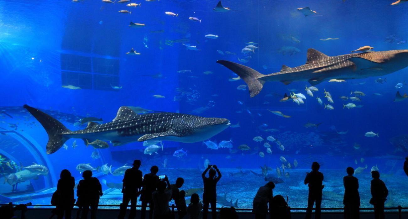 Must-visit Aquariums in the USA